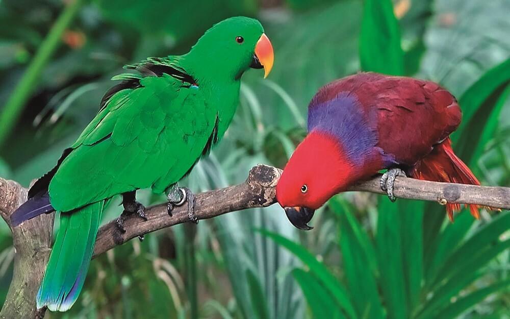 Ερασιτέχνες με μεγάλο πουλί